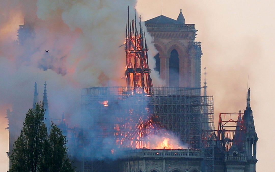 Les chênes de Notre-Dame